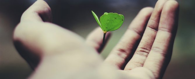 Plant budding in someone's hand.