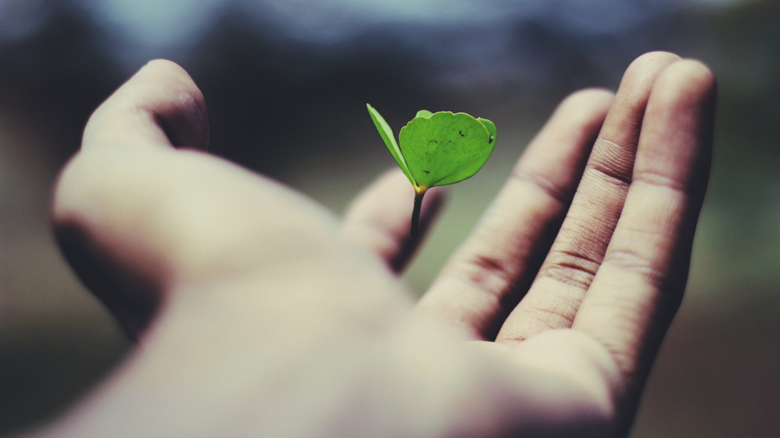 Plant budding in someone's hand. A metaphor for how the right philanthropy insights can help philanthropists' big gifts flourish.
