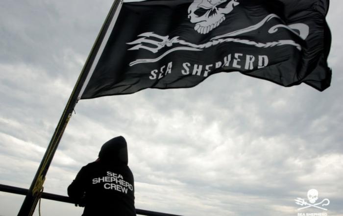 Sea Shepard Flag with Crew Member.